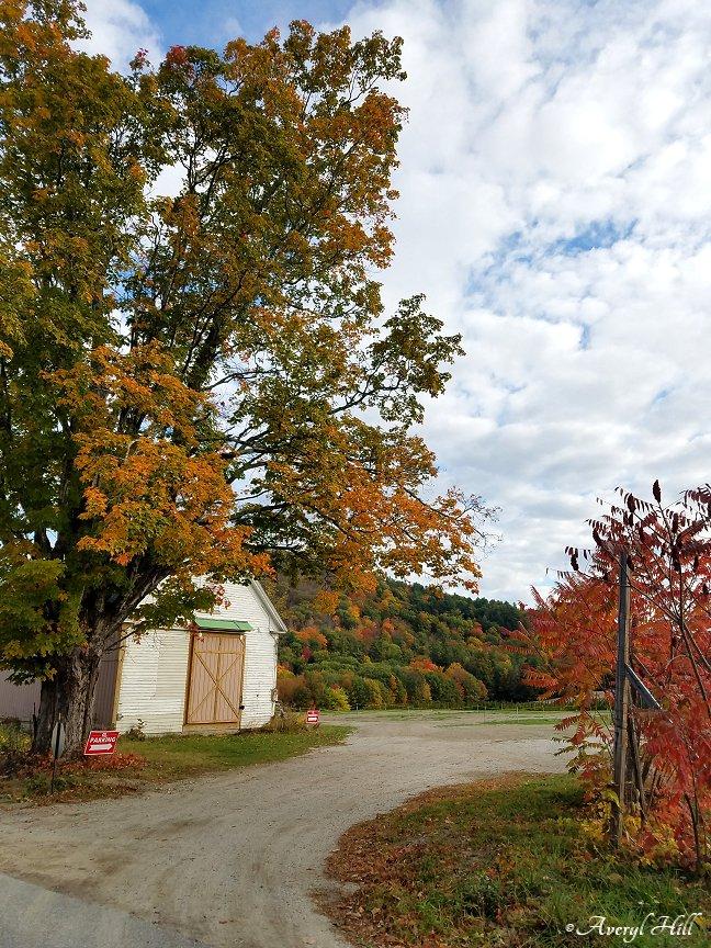 Maine Peak Foliage Leaf Peeping 2019 (15)