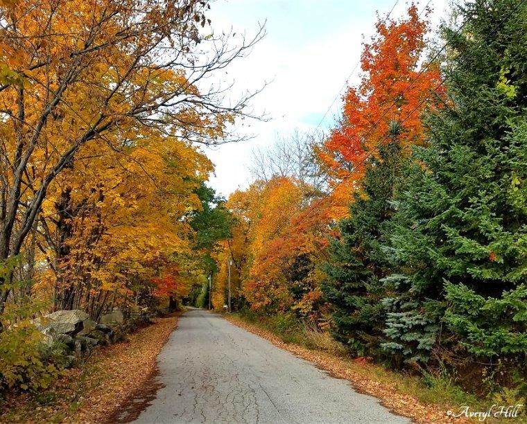 Maine Peak Foliage Leaf Peeping 2019 (16).jpg