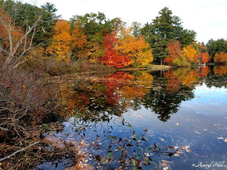 Maine Peak Foliage Leaf Peeping 2019 (21).jpg