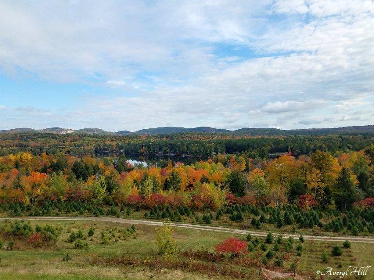 Maine Peak Foliage Leaf Peeping 2019 (24)