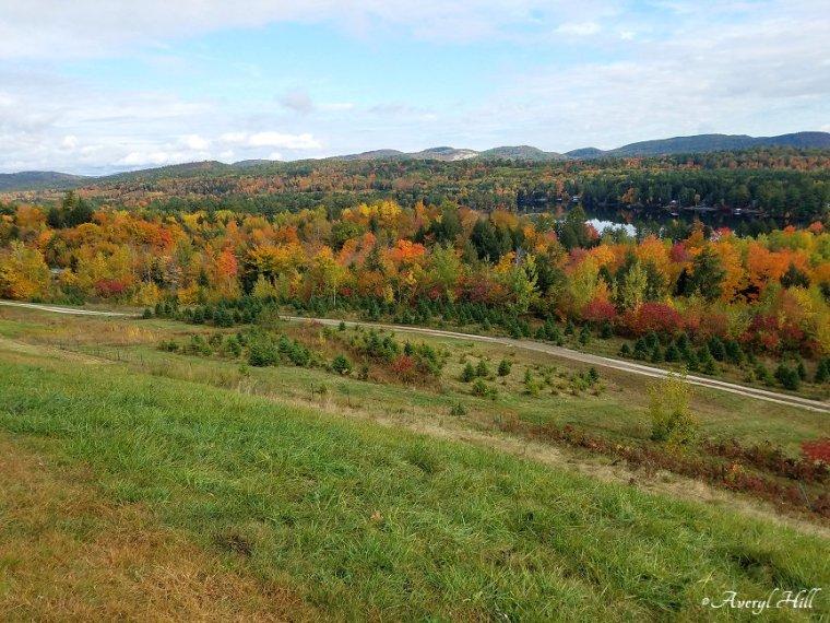 Maine Peak Foliage Leaf Peeping 2019 (25)