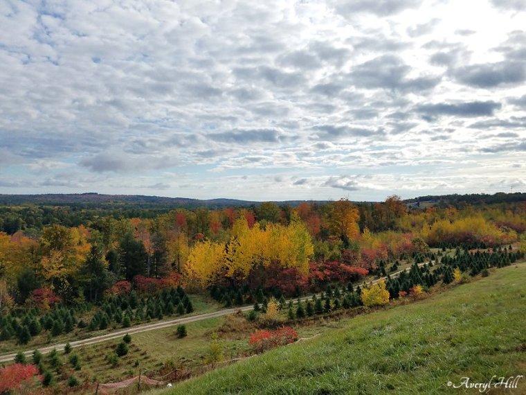 Maine Peak Foliage Leaf Peeping 2019 (28)