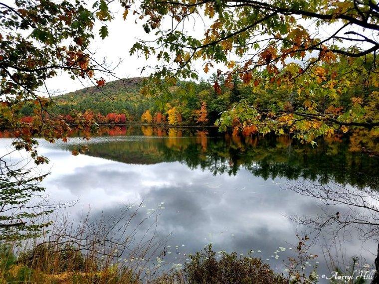 Maine Peak Foliage Leaf Peeping 2019 (32).jpg