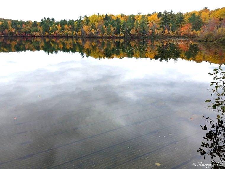 Maine Peak Foliage Leaf Peeping 2019 (37).jpg