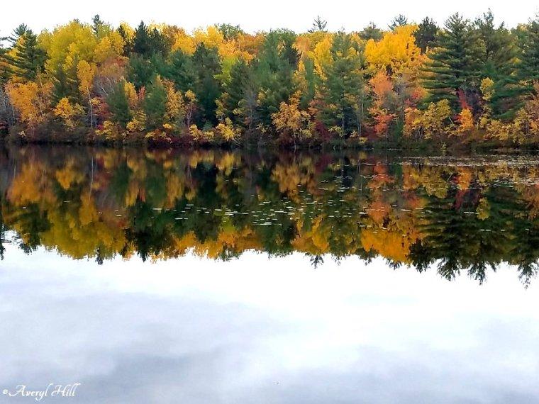 Maine Peak Foliage Leaf Peeping 2019 (38)