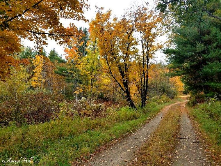 Maine Peak Foliage Leaf Peeping 2019 (43).jpg