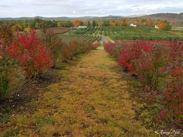 Maine Peak Foliage Leaf Peeping 2019 (7)