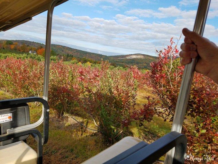Maine Peak Foliage Leaf Peeping 2019 (9)