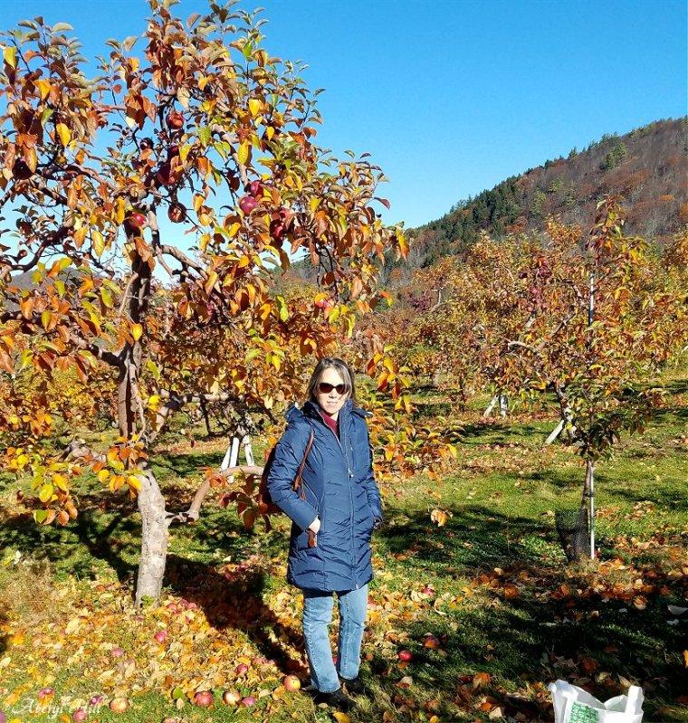 averyl-apple-orchard.jpg