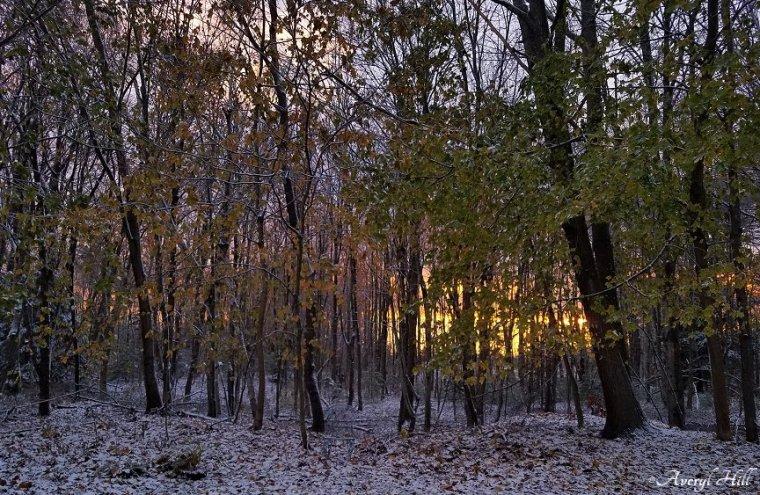 First Snowfall (1).jpg