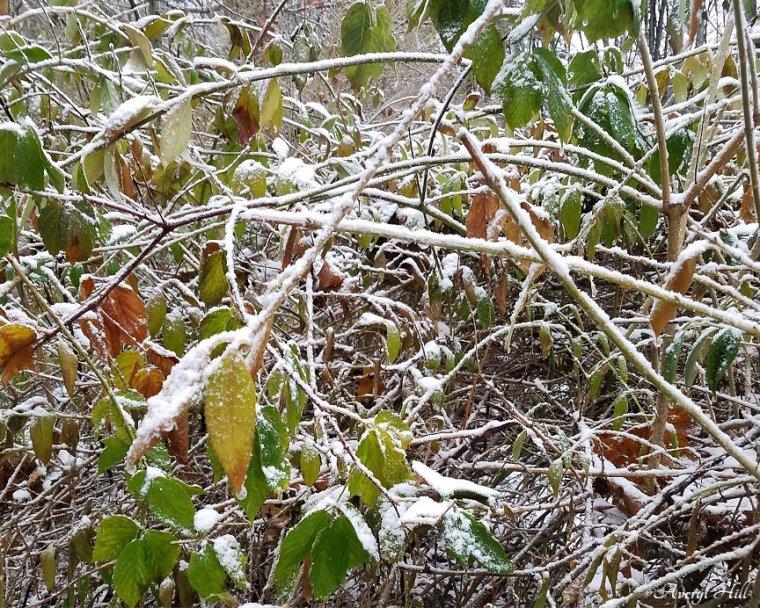 First Snowfall (12).jpg