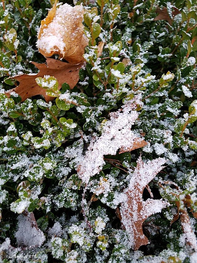 First Snowfall (2).jpg