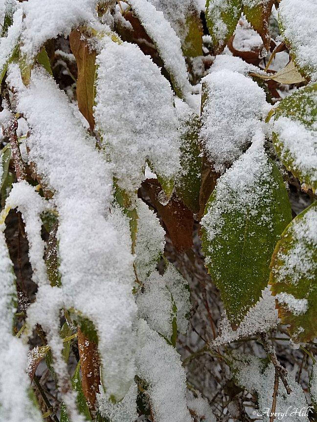 First Snowfall (3).jpg