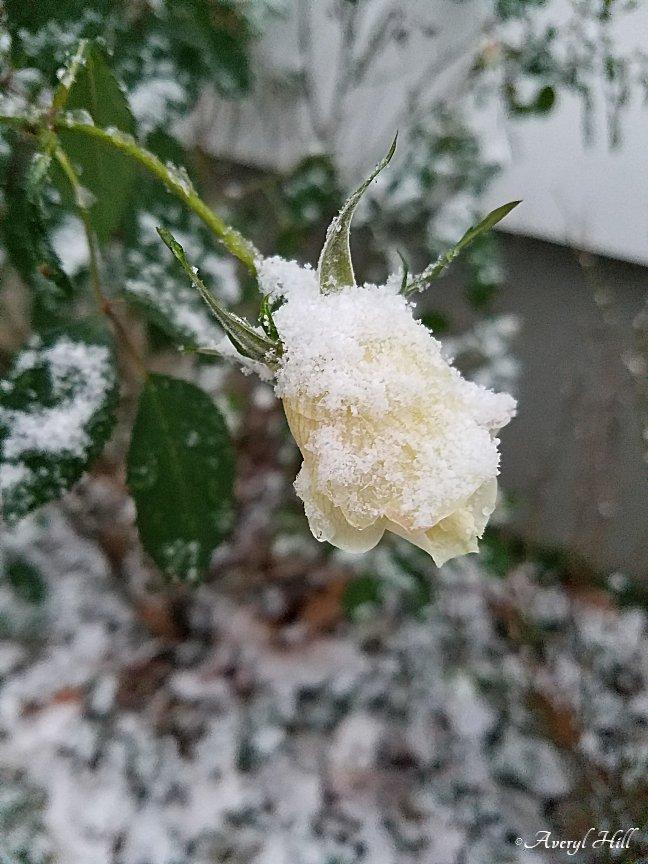 First Snowfall (4).jpg
