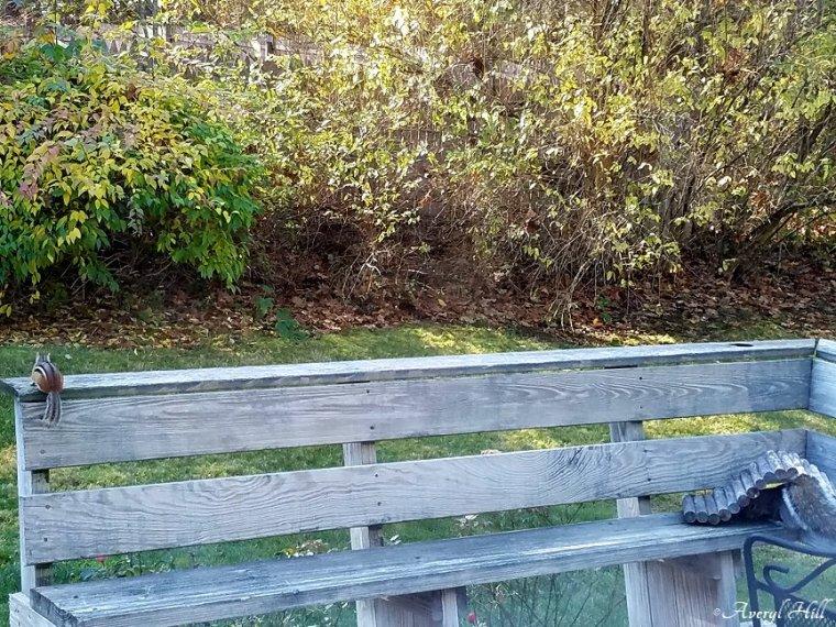 Panhandling Squirrel (4).jpg