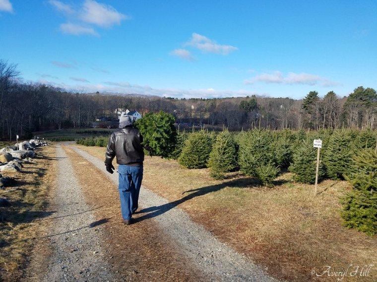 Vintage Christmas Real Tree 2019 (8).jpg