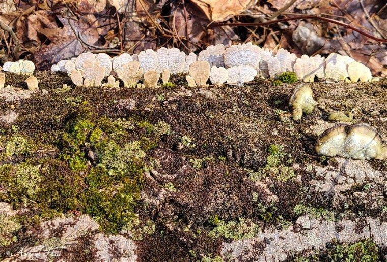 Fungus (2)