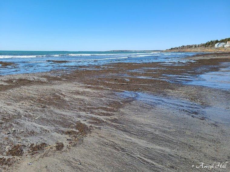 Higgins Beach Scarborough Maine (11)