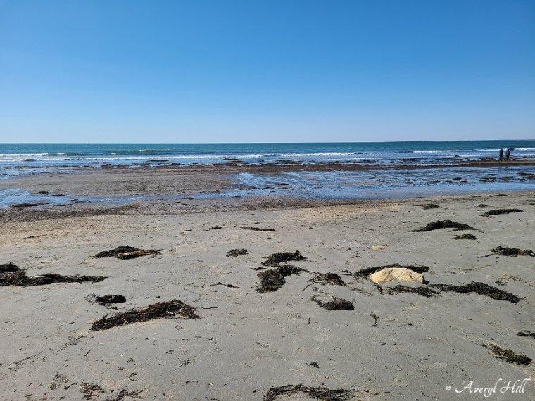 Higgins Beach Scarborough Maine (2)